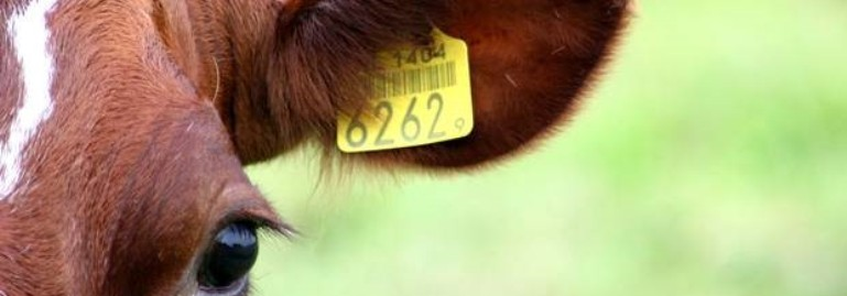 Livestock Traceabililty